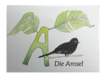 A = Amsel - Magnet 89x64mm